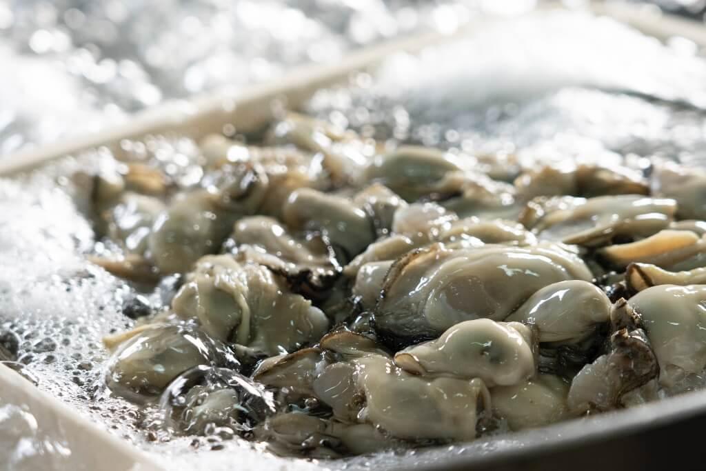 身のしまった牡蠣のイメージ